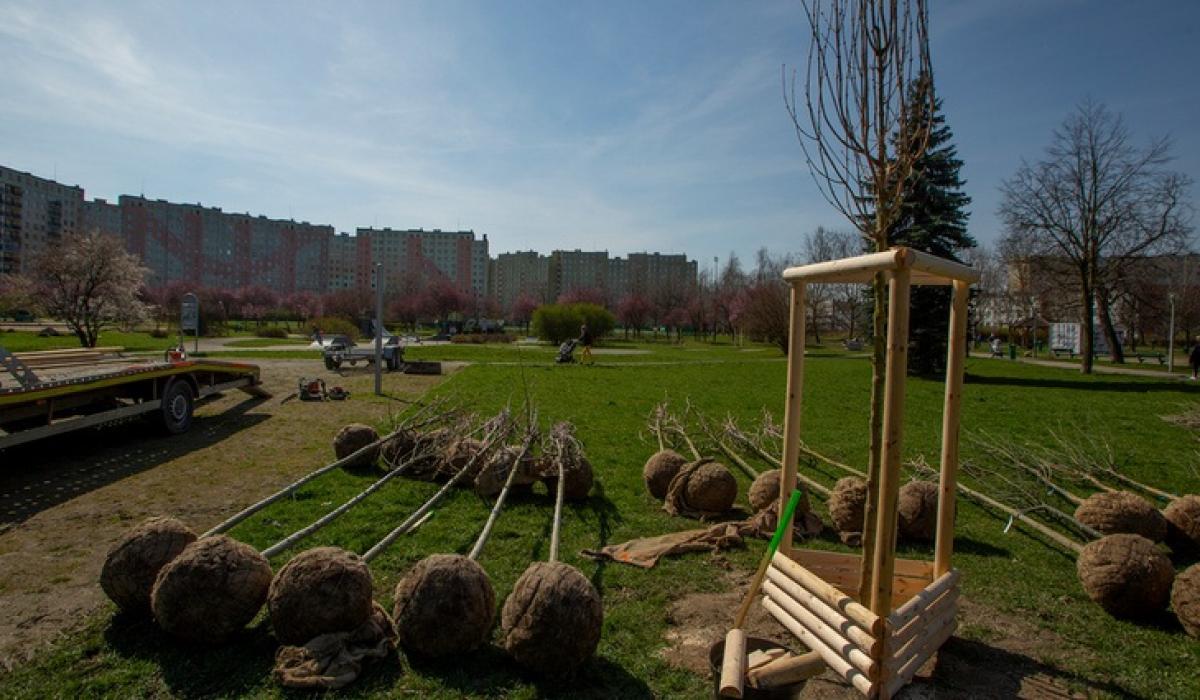 Sadzenie drzew w parku Słonecznym na Gaju
