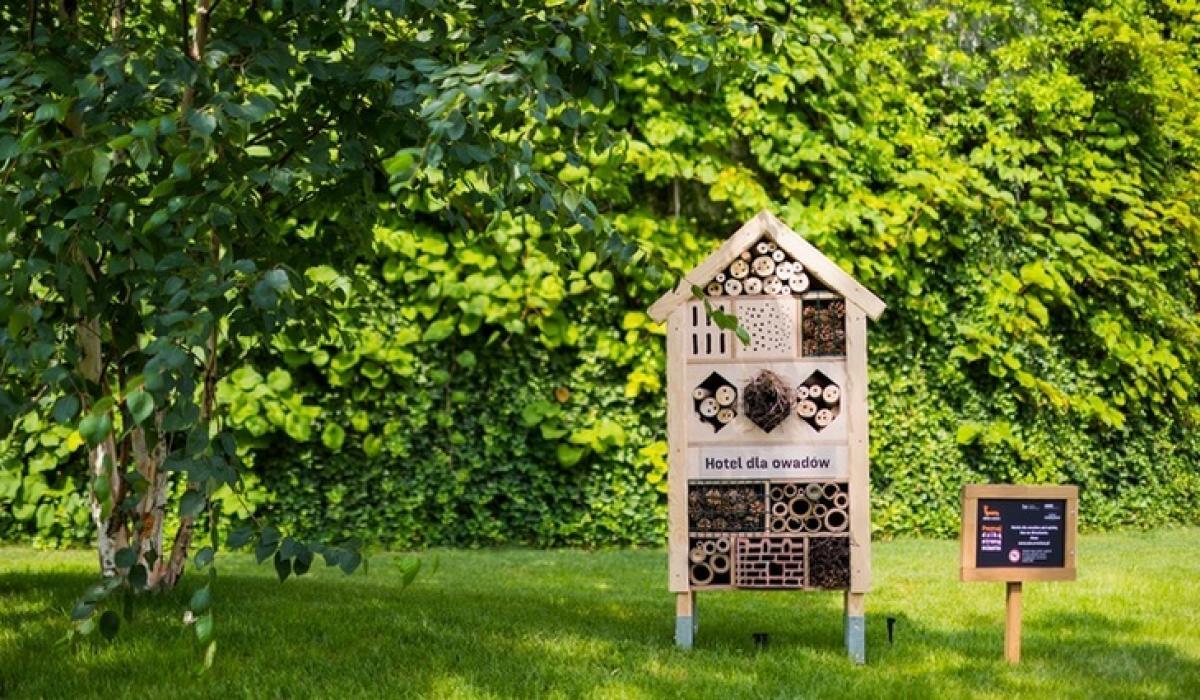 W owadzich hotelach pod Wroclavią powinna pojawić się dzika pszczoła - murarka ogrodowa.