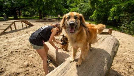 Światowy Dzień Psa - wybiegi dla psów we Wrocławiu [MAPA]