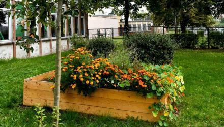Ogród warzywny w Szkole Podstawowej nr 43 przy ul. Grochowej we Wrocławiu
