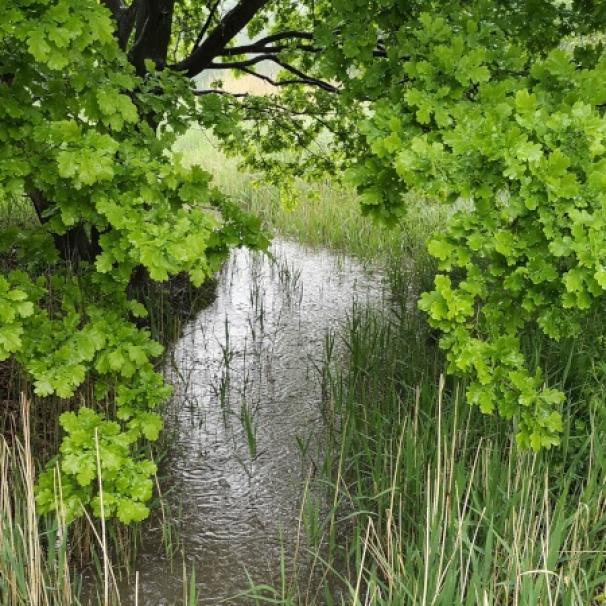 Jest umowa na zagospodarowanie wód w dolinie Olszówki Krzyckiej. Prace potrwają 20 miesięcy
