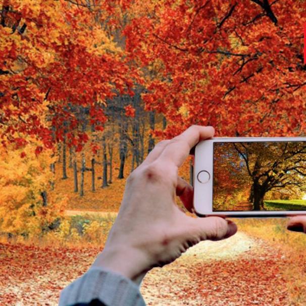 Zgłoś swoje ulubione drzewo i weź udział w konkursie Zielonego Wrocławia